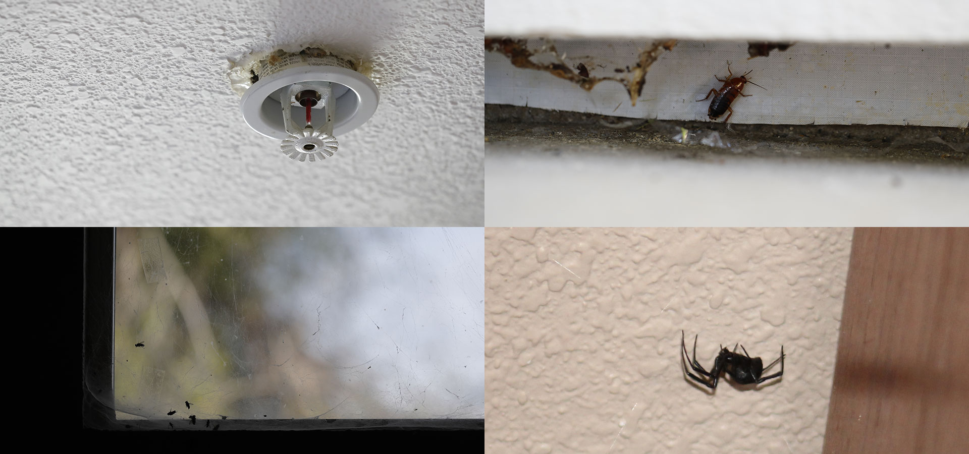 Spiders, sewage, fees – the other side of renting from Wall