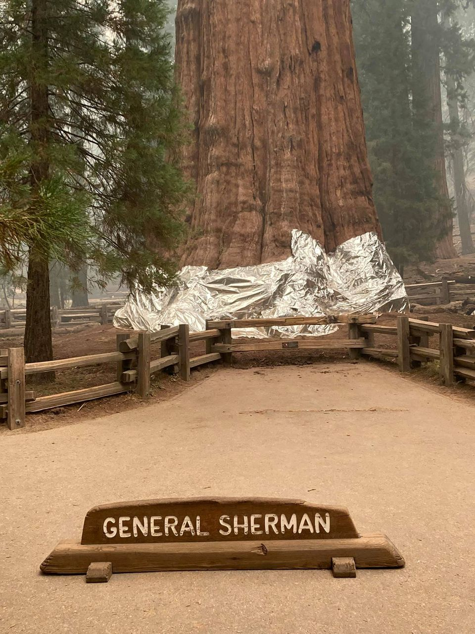 California Fire Crews Protect World's Largest Tree in Fire-resistant Wrap As Wildfires