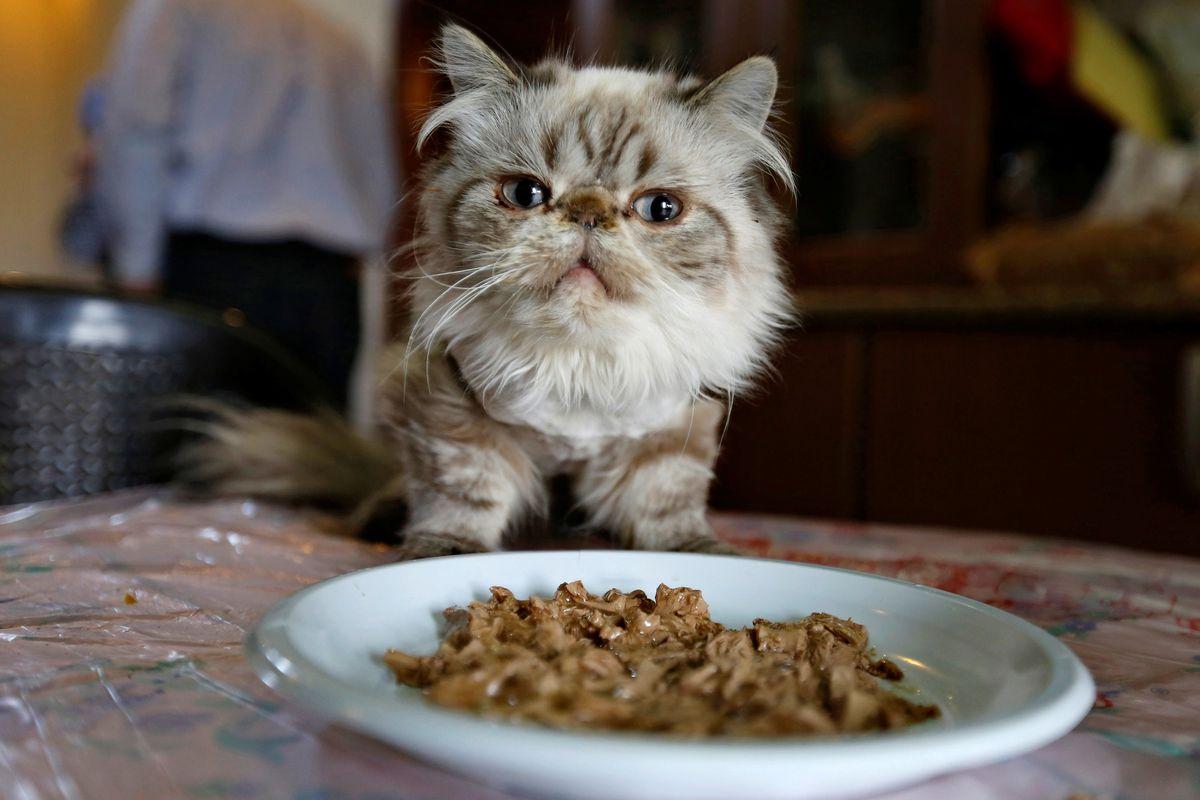 Pet Food Shortages