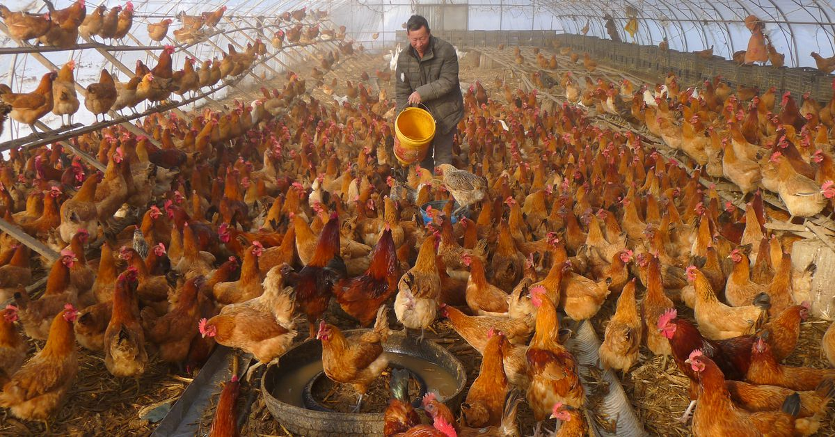 Increase in human bird flu cases in China shows risk of rapidly changing varieties: experts