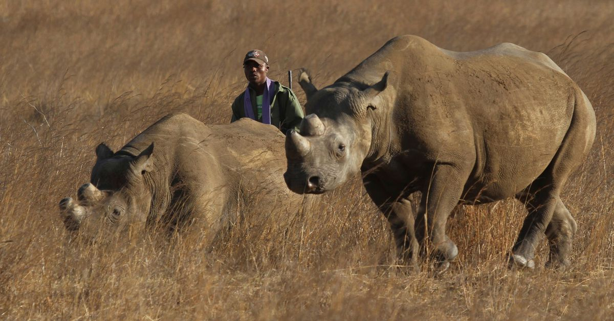 Zimbabwe is Re-introducing Rhinos to Gonarezhou Park After Three Decades