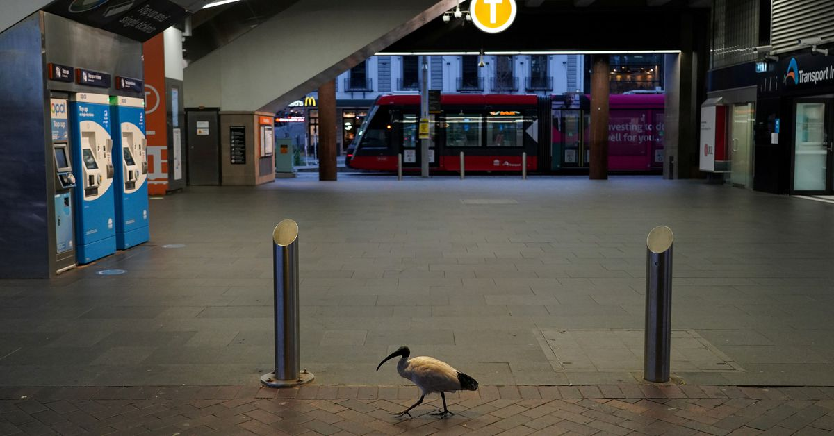 A lone bird walks past the quiet Circular Quay train station during a lockdown to curb the spread of a coronavirus disease (COVID-19) outbreak in Sydn